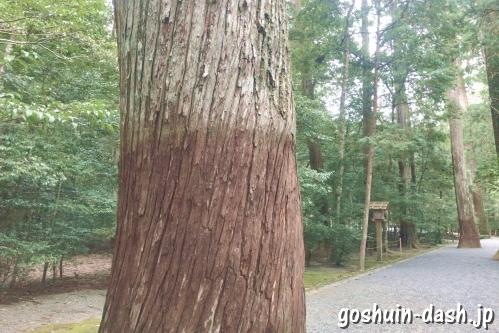 ねじり杉(瀧原宮)